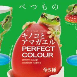 【イメージ】キノコとアマガエル PERFECT COLOR